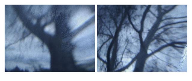 bluetrees02